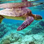 Pulau Redang snorkelling