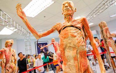 Tempat BEST di Bangkok - human body